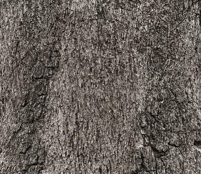 Текстура древесины от дерева, черно-белый тон стоковое фото rf