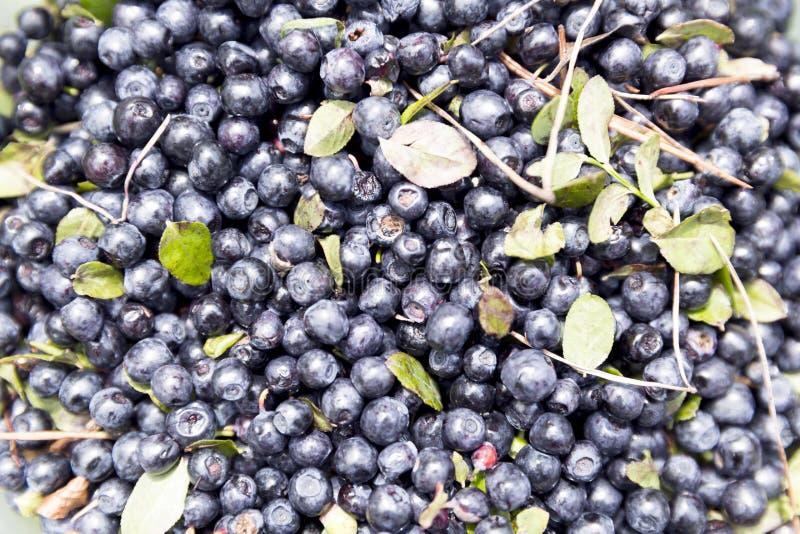 текстура свежих фруктов голубики предпосылки Ягоды голубики текстуры закрывают вверх стоковое изображение rf