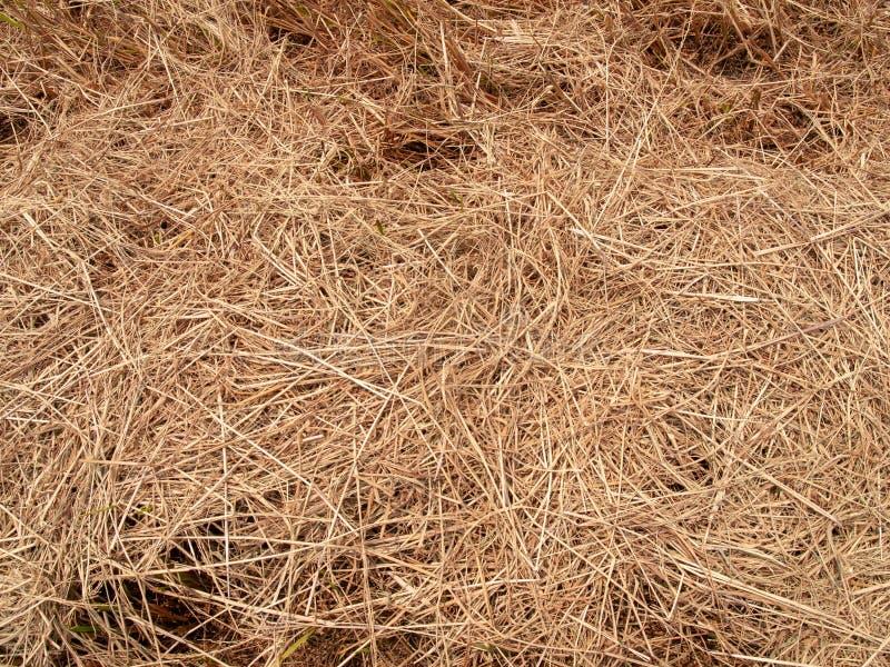 Текстура сена сухая с концом вверх по изображению стоковое изображение