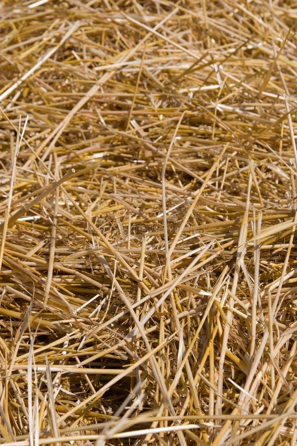 текстура сена стоковые фотографии rf