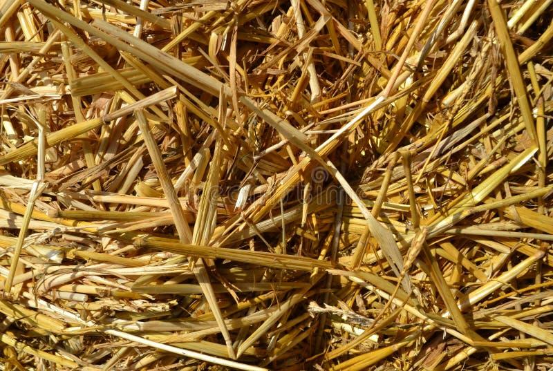 Текстура соломы как предпосылка природы осени стоковое фото