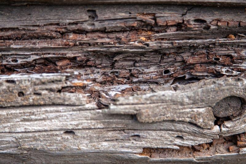 Текстура старого тухлого деревянного журнала стоковое изображение rf