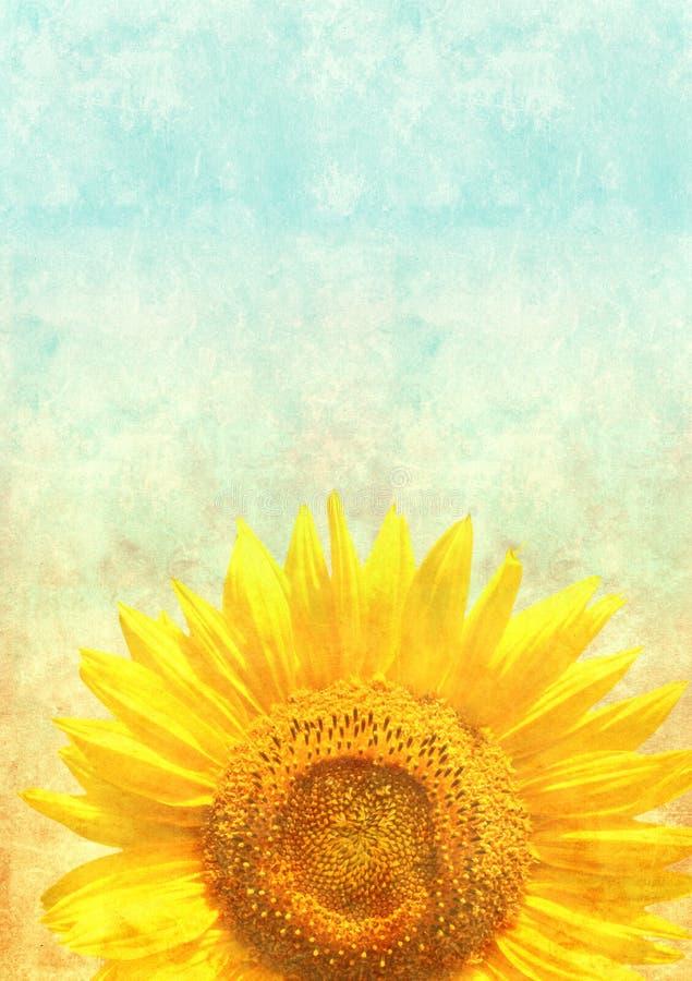 Текстура старой бумаги с солнцецветом иллюстрация штока