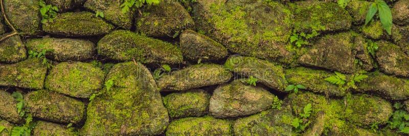 Текстура старой каменной стены покрыла зеленый мох в форте ЗНАМЯ Роттердама, Макассара - Индонезии, длинный формат стоковое изображение
