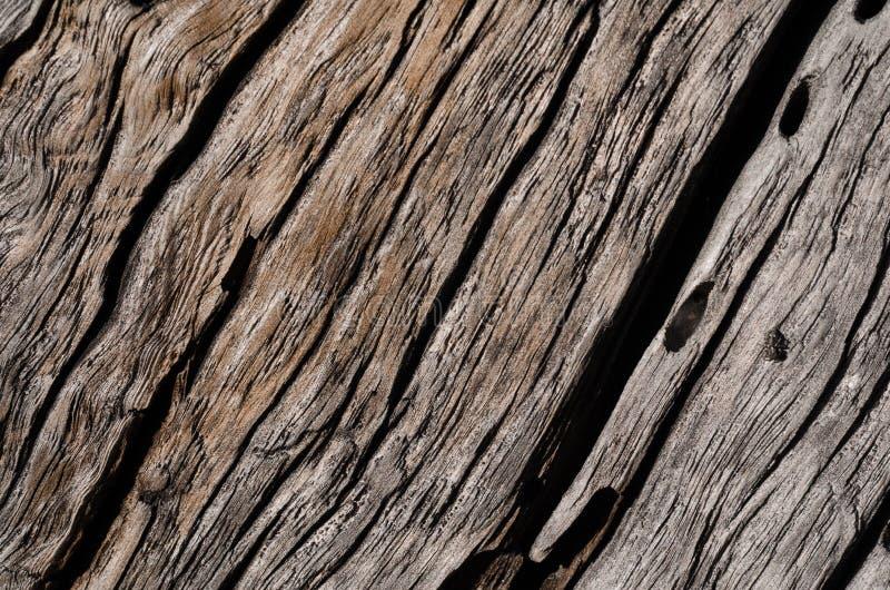 Текстура старый серый цвет, тухлая деревянная доска с большими отказами стоковые фотографии rf