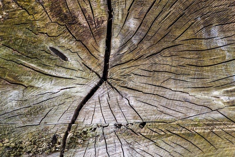 Текстура ствола дерева стоковая фотография