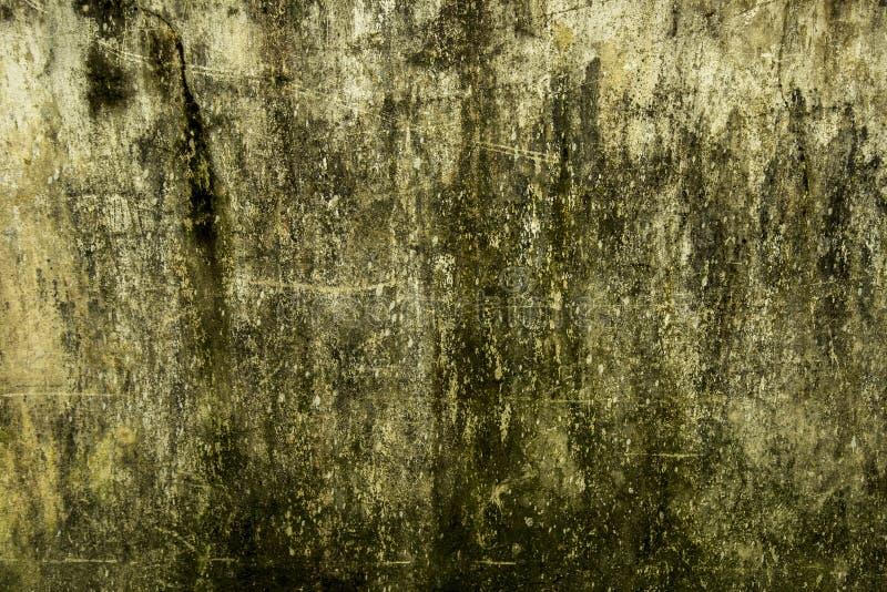 Текстура стены грибная на дождливый день в Бангладеше стоковые изображения