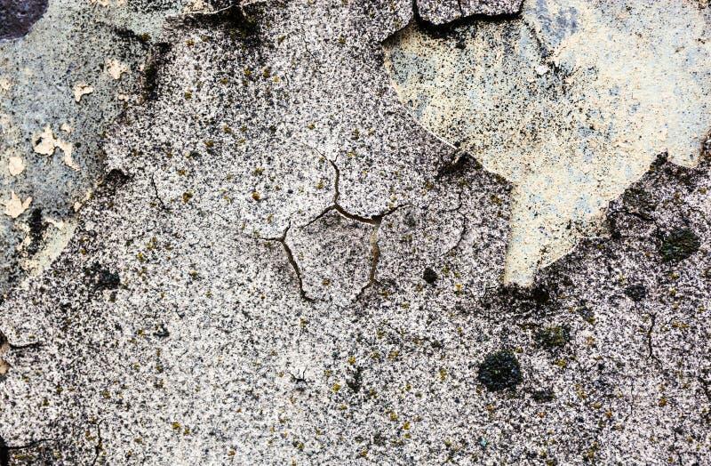 Текстура стены с мхом и треснутыми гипсолитом и побелкой стоковая фотография rf