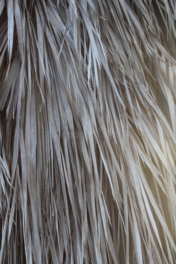 Текстура сухих листьев ладони стоковое изображение rf