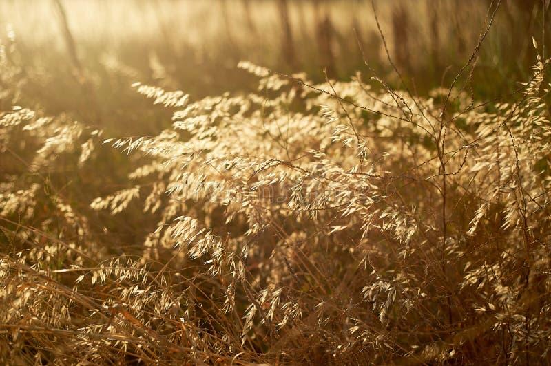 Текстура травы, трав Близко Ферма и ботаника стоковые фотографии rf