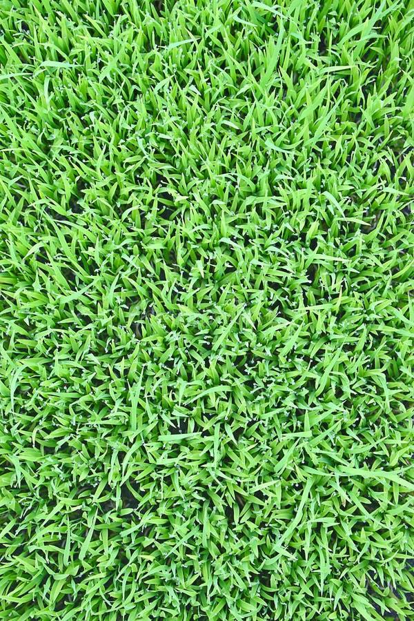текстура травы стоковое изображение rf