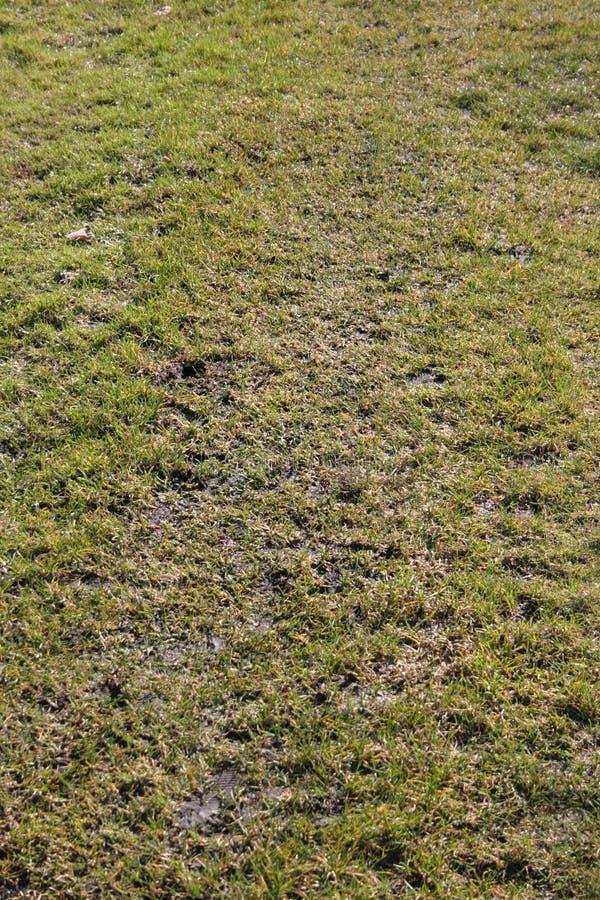 текстура травы Стоковые Фото