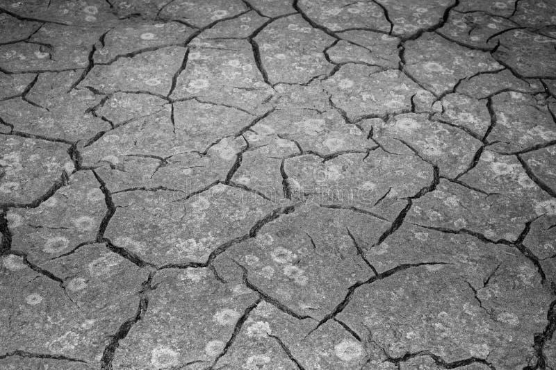 Текстура трескать земли Концепция использования природных ресурсов Черно-белое изображение стоковое фото
