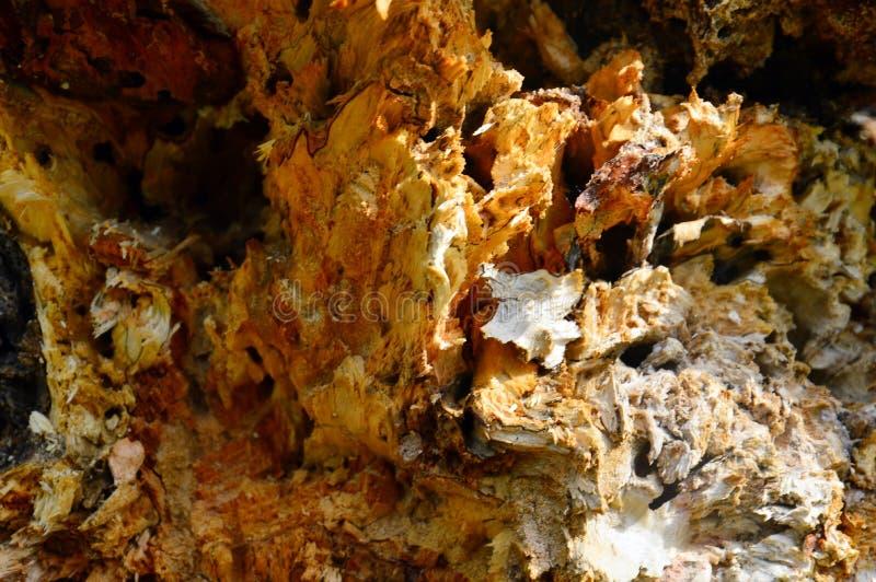 Текстура тухлого ствола дерева внутренне Аннотация стоковая фотография rf