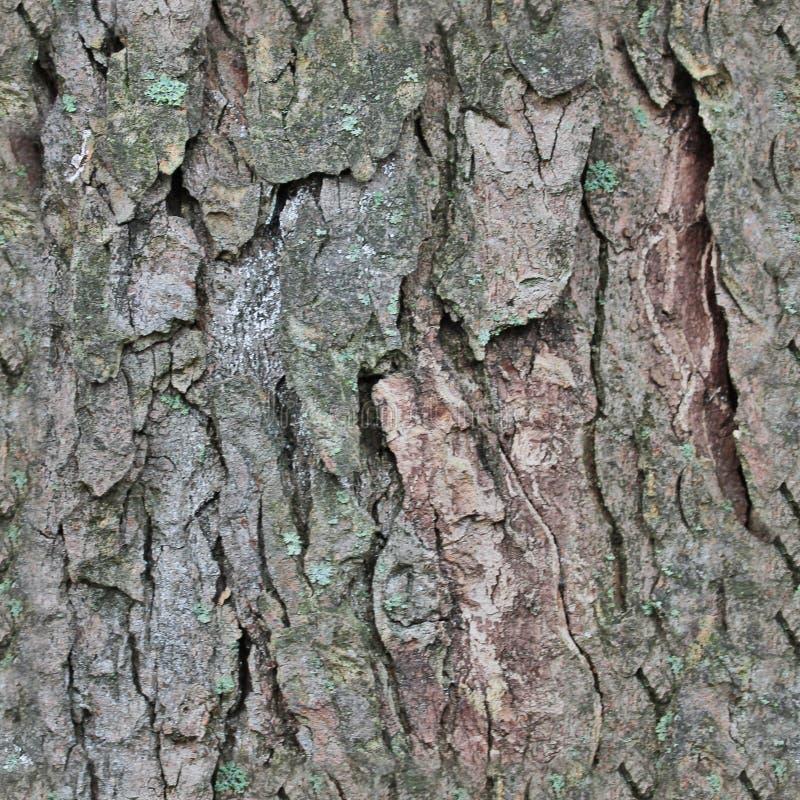 Текстура фото реалистическая коры дерева в высоком разрешении стоковые изображения