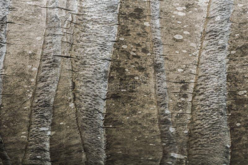 Текстура хобота кокоса стоковая фотография rf