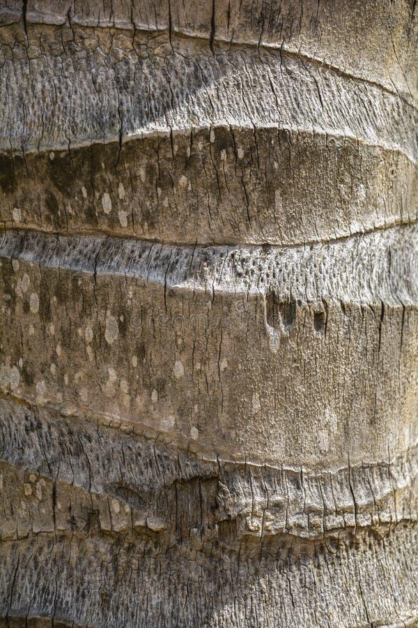 Текстура хобота кокоса стоковое фото rf