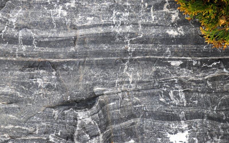 Текстура черно-белого стратифицированного утеса с зелеными и желтыми всходами стоковые фото