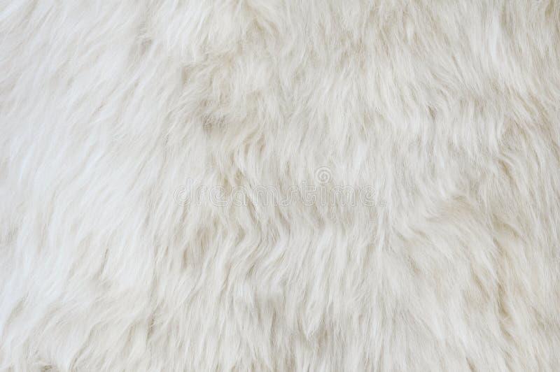 Текстура шерсти овец стоковое фото