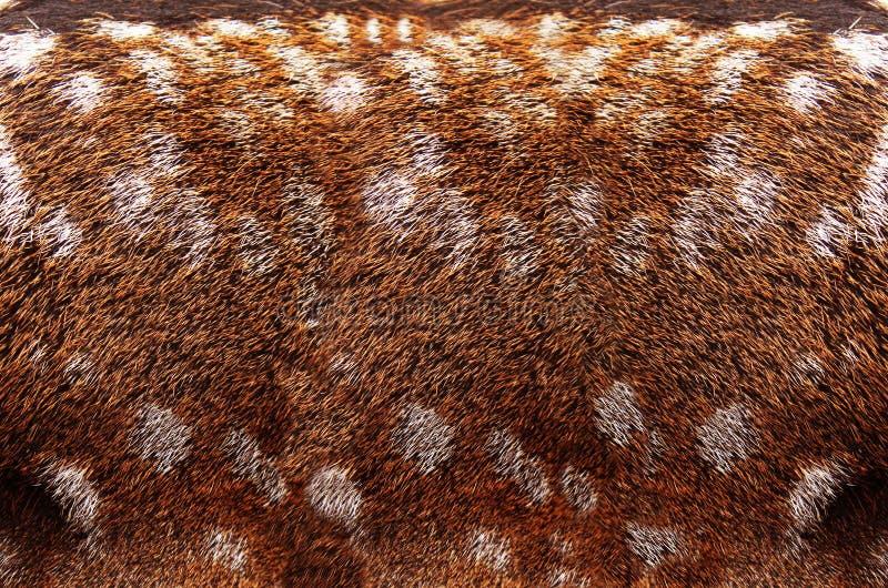 Текстура шерсти стоковое фото