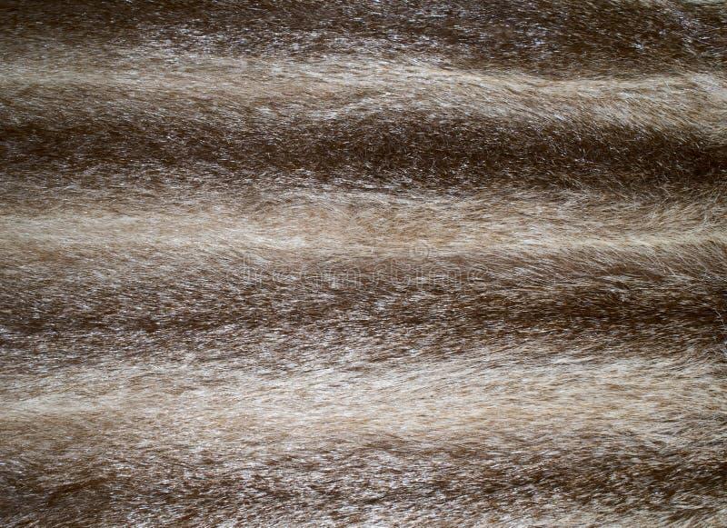 текстура шерсти стоковое изображение rf