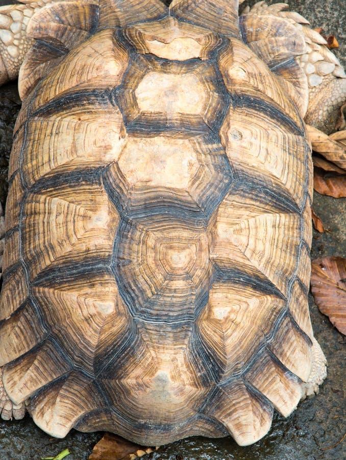 Текстура carapace черепахи , картина на backgrou раковины черепахи стоковые фотографии rf
