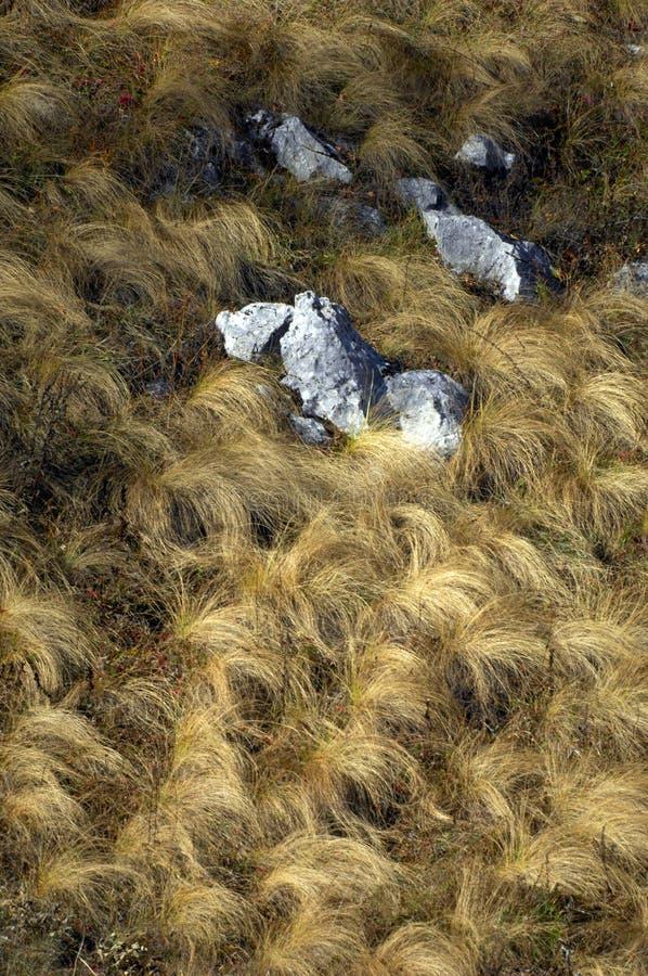 текстура grunge сухой травы стоковые изображения