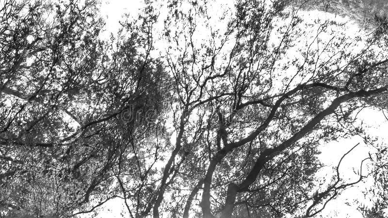 Текстура Monocrome стоковое фото