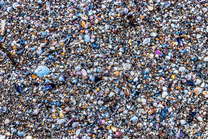 Текстура Seashells в Natura на пляже стоковое изображение rf
