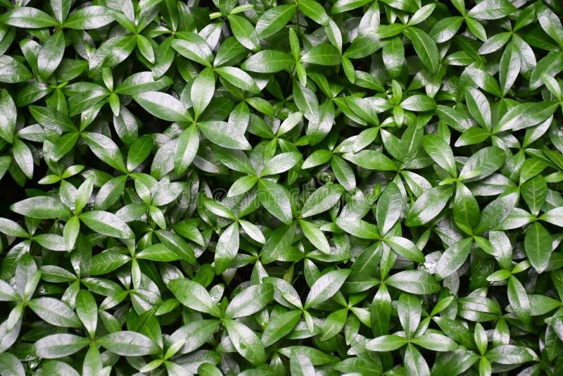 Текстурированная зеленая трава в природе стоковая фотография rf