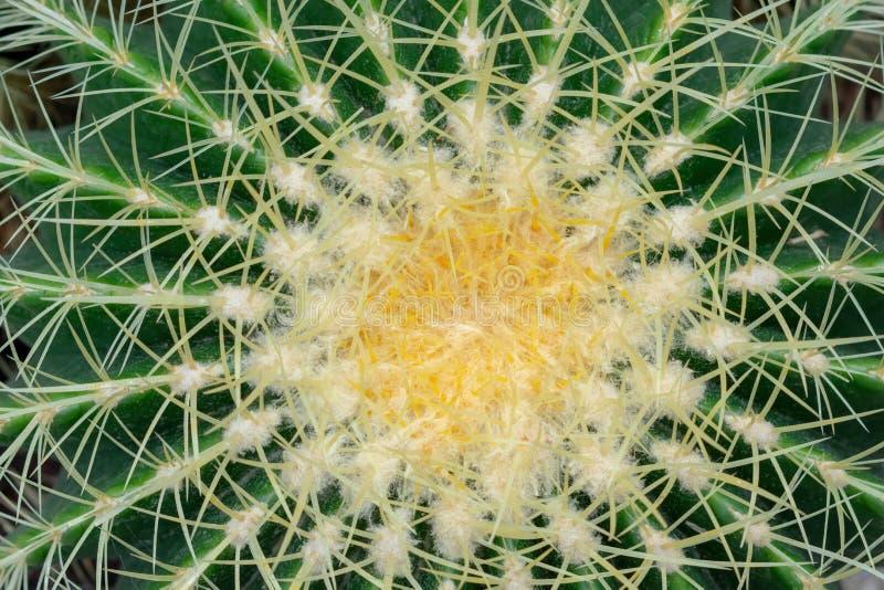 Текстурированная предпосылка кактуса стоковое фото