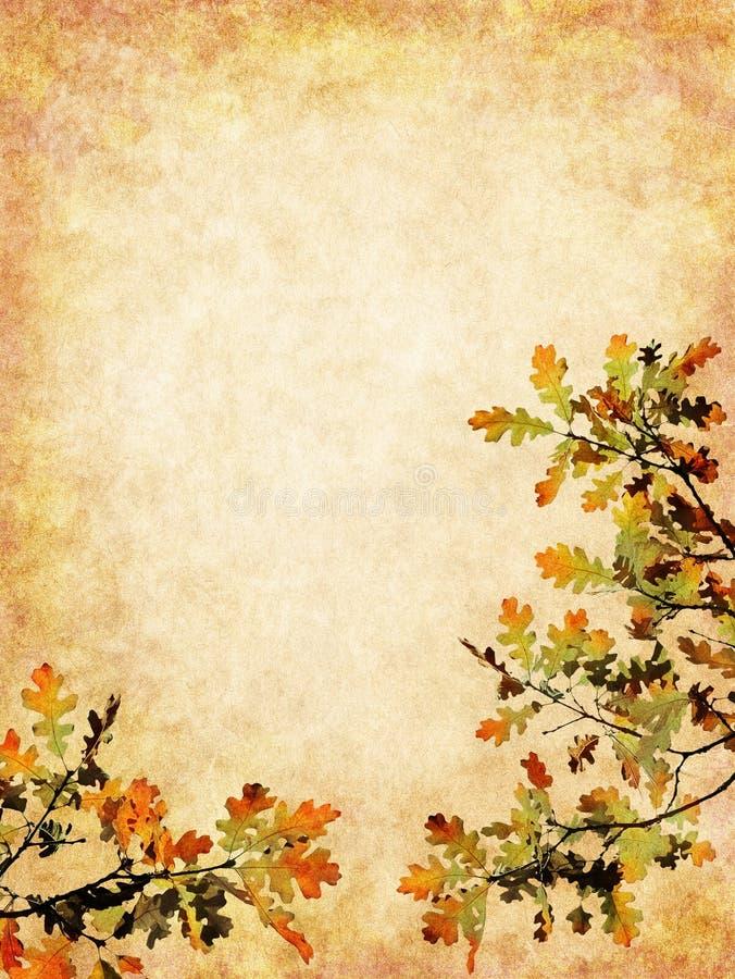 текстурированные листья осени стоковые изображения rf