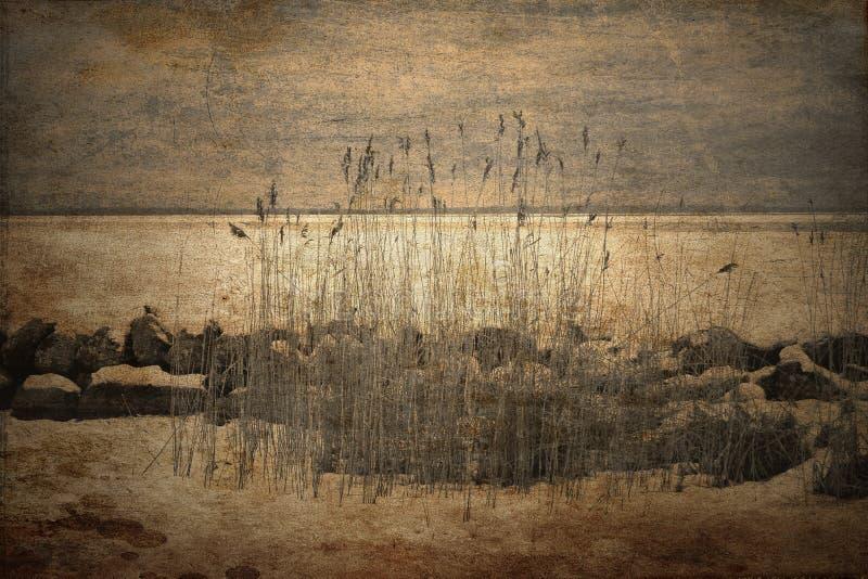 Текстурированные тростники в wintertime стоковая фотография
