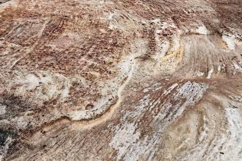 Текстурированный выход на поверхность песчаника, Сидней, Австралия стоковое изображение