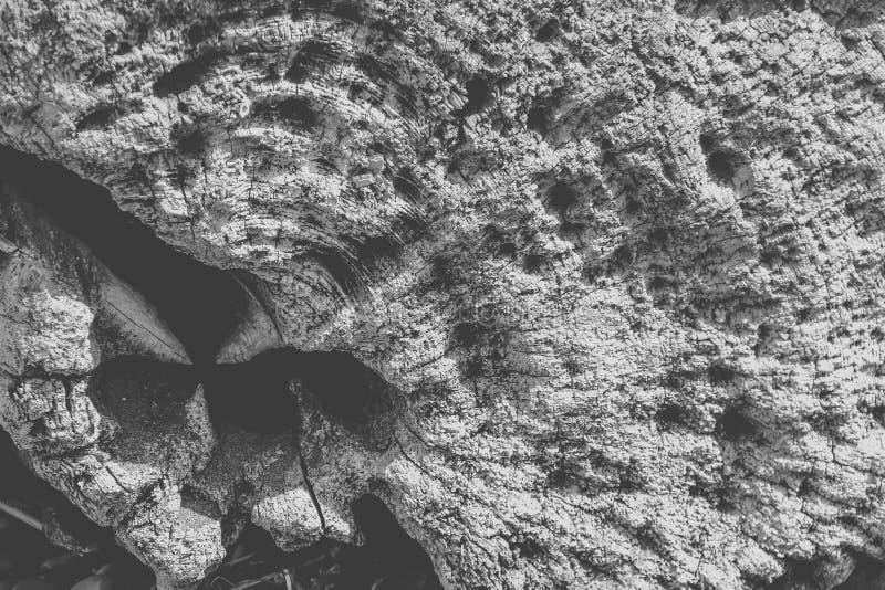 Текстурированный конец driftwood стоковые фото