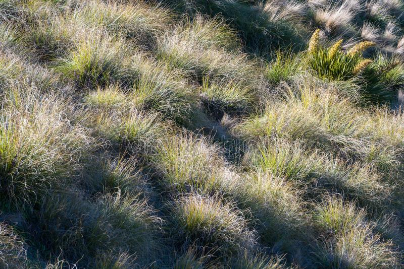 Текстурированный том зеленой травы под заходящим солнцем стоковые фотографии rf