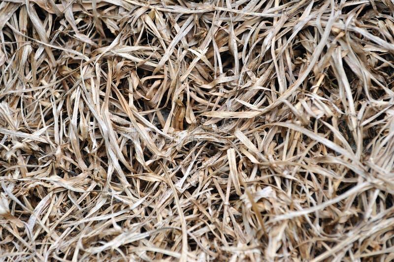 текстуры высушенной травы стоковые фотографии rf