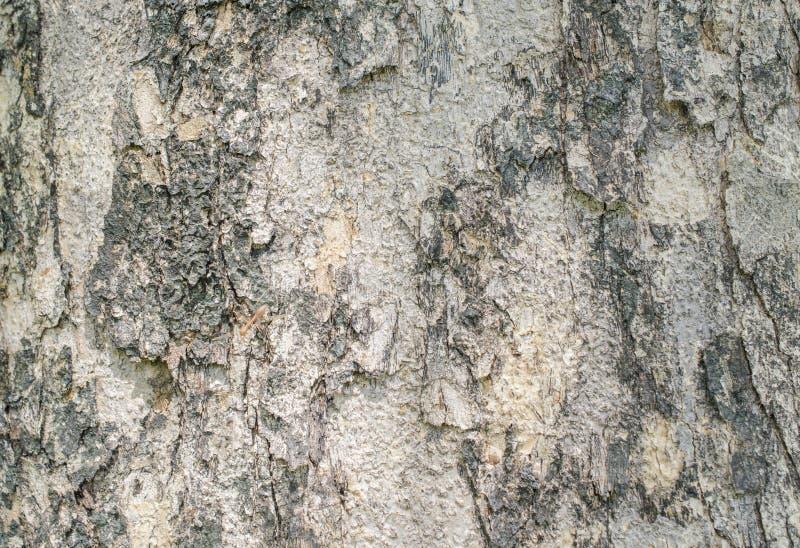 Текстуры расшивы стоковые фотографии rf