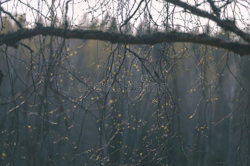 Текстуры ствола дерева в окружающей среде - винтажном взгляде фильма стоковое фото rf