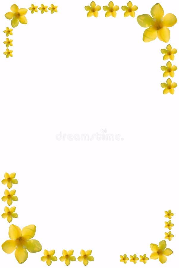 текст космоса рамки цветка стоковые изображения