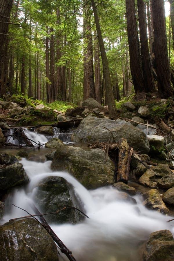 текущая вода стоковые фотографии rf