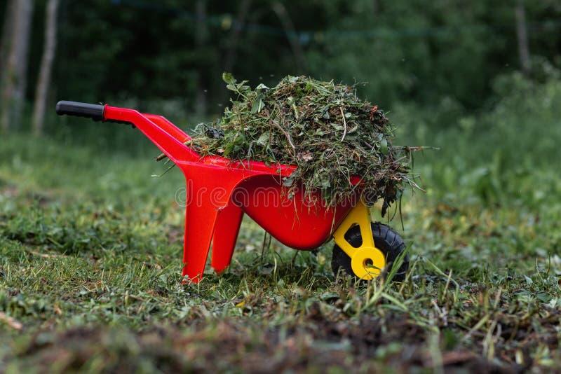 Тележка красных детей с травой и сеном процесс ребенка очищая стоковое изображение