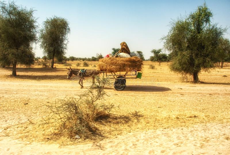 Тележка осла на Дакаре, Сенегале стоковое фото rf