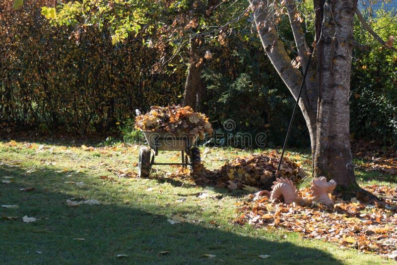 Тележка сада с собранными кленовыми листами на утре осени стоковые фотографии rf