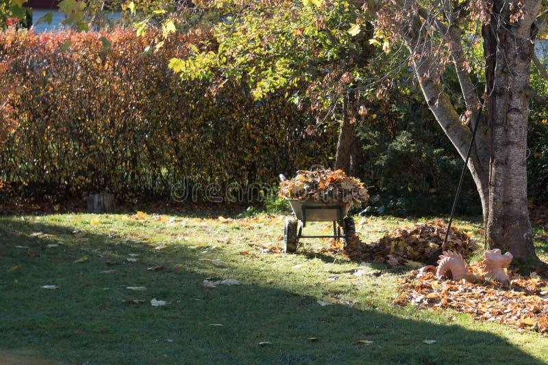 Тележка сада с собранными кленовыми листами на утре осени стоковые изображения rf