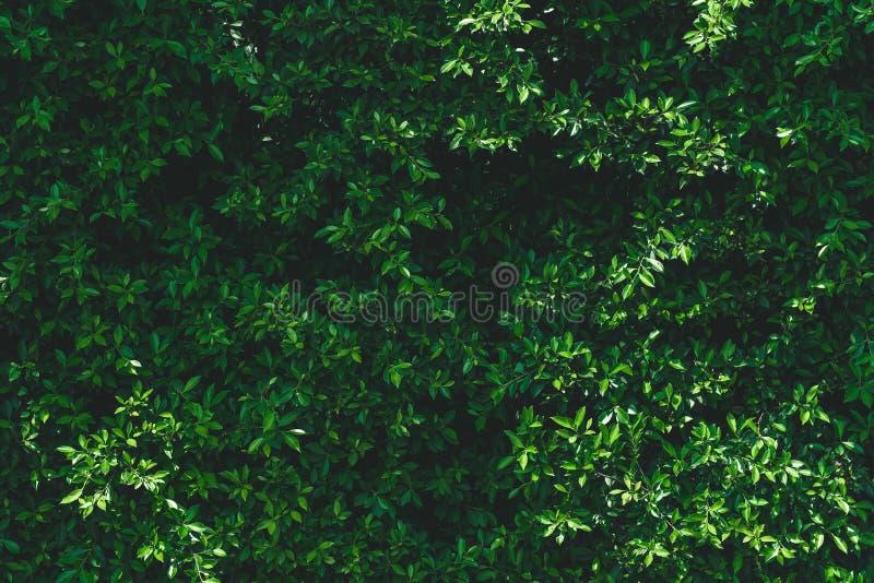 Темная ая-зелен предпосылка листьев стоковая фотография rf