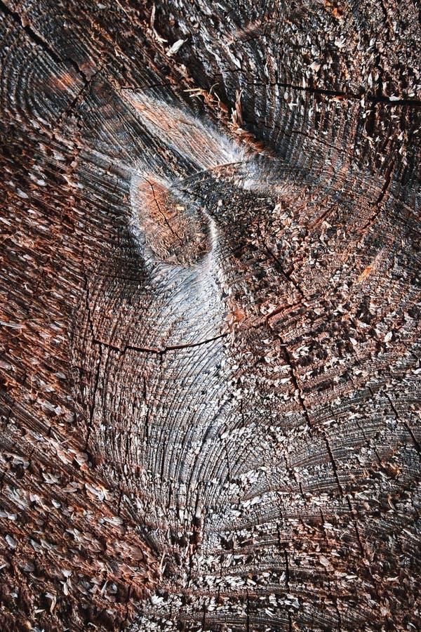 Темная деталь серой деревянной доски стоковая фотография rf