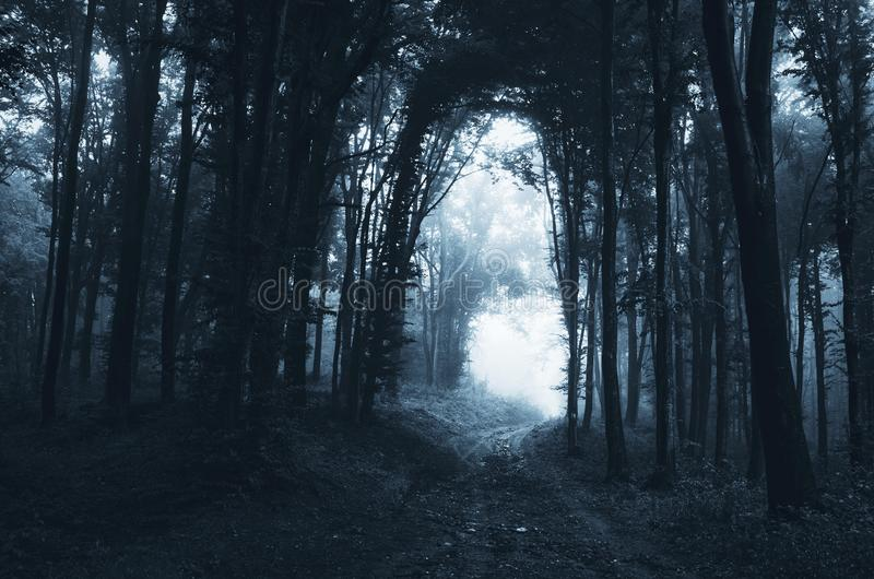 Темная дорога через загадочный лес стоковое фото