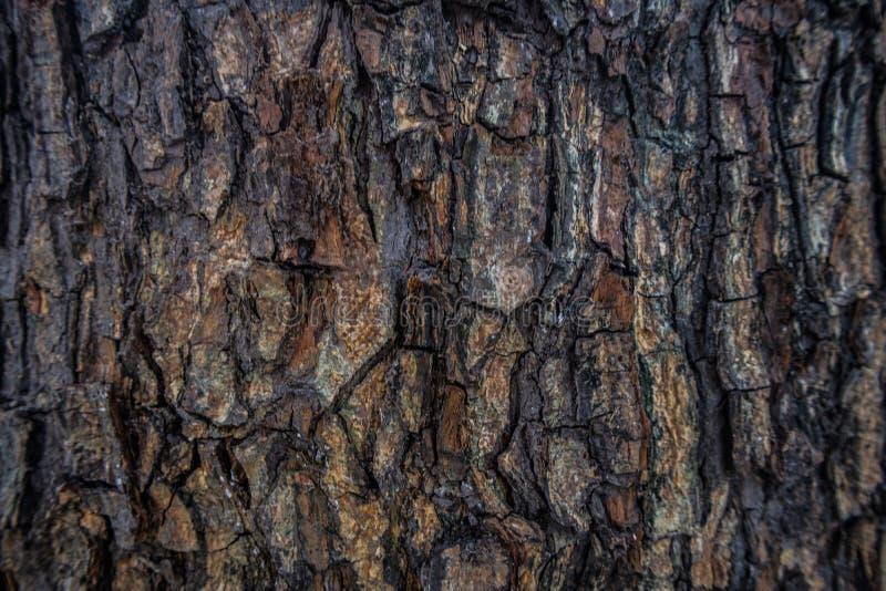 Темная древесина кожи стоковое изображение