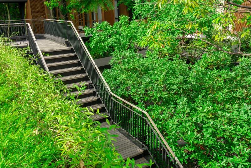 Темная коричневая деревянная лестница с черный стальной railling среди зеленых листьев завода и деревьев проползать около здания стоковые фотографии rf